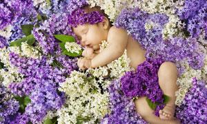 在丁香花上睡觉的宝宝摄影高清图片