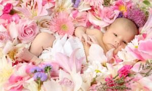 躺在多种鲜花上的宝宝摄影高清图片