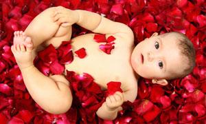 花瓣上躺著的可愛寶寶攝影高清圖片