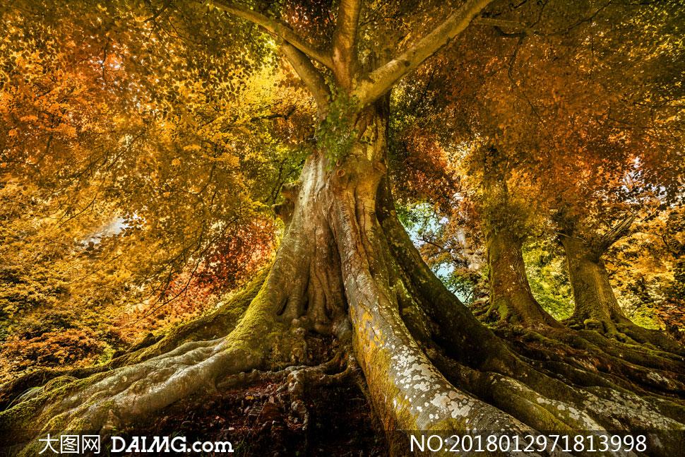 大图首页 高清图片 自然风景 > 素材信息          粉红色大树与远处