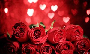桃心光斑与玫瑰花特写摄影高清图片