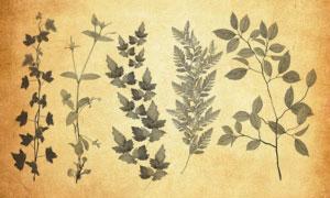 20款高清晰植物藤蔓PS笔刷