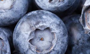 大个头的蓝莓近景特写摄影高清图片