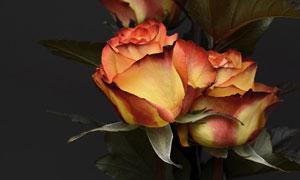 寒冷冬天里的花卉植物特写高清图片