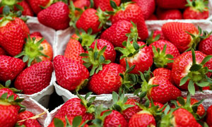 市场上售卖的品质草莓摄影高清图片