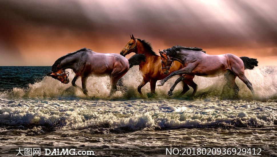 在海边奔腾的几匹骏马摄影高清图片