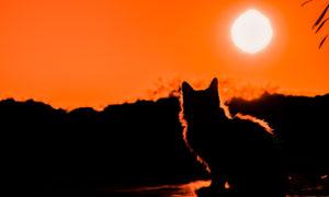 夕阳西下的小猫咪剪影效果高清图片