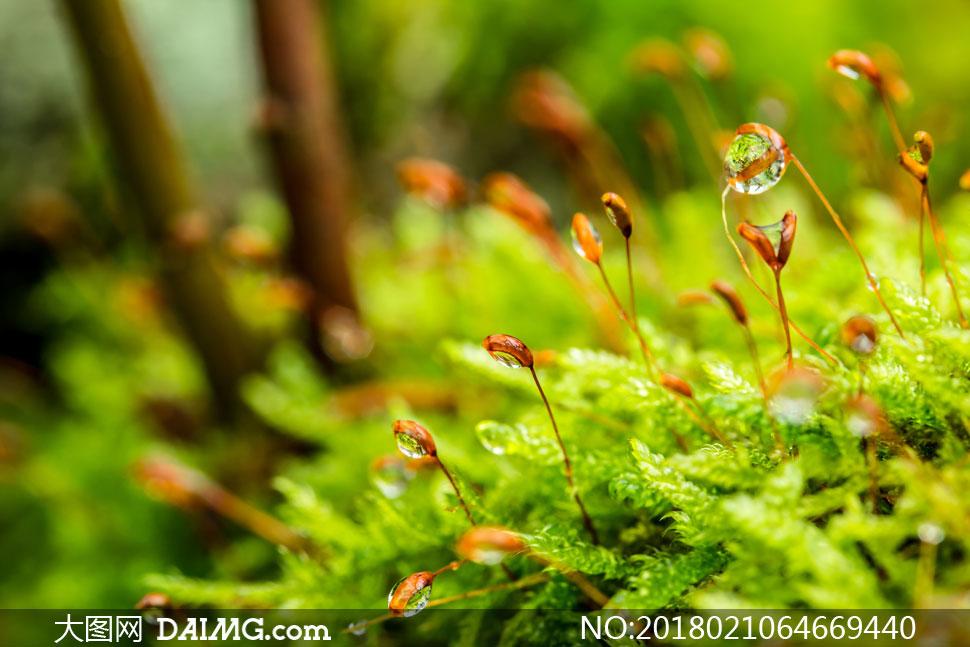 树林间挂着水珠的植物摄影高清图片