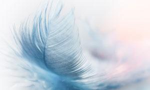 飘飘忽忽掉下来的羽毛摄影高清图片