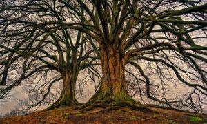 生长在高处的大树风光摄影高清图片