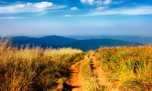 蓝天下的田园美丽风光摄影图片