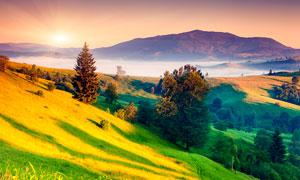 清晨山坡美丽景观摄影图片