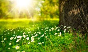清晨阳光下的绿色花草摄影图片