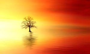 湖中美丽的枯树摄影图片