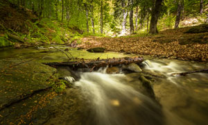 林中美丽的小溪流水摄影图片