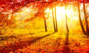 秋季阳光下的树林美景摄影图片