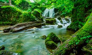 林中小溪流水美景摄影图片