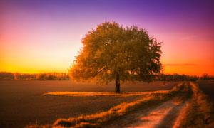 田园间的大树黄昏美景摄影图片