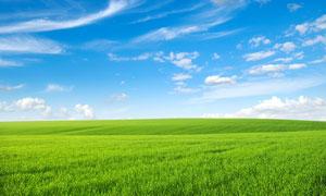 蓝天白云下的绿色草地图片素材