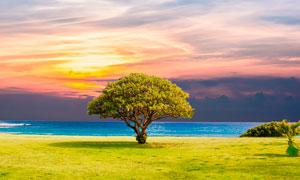 湖边大树黄昏美景摄影图片