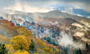 大山中雾气蒸腾的树林摄影高清图片
