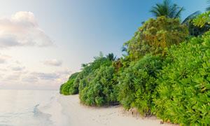 蓝天白云与大海边的灌木丛高清图片