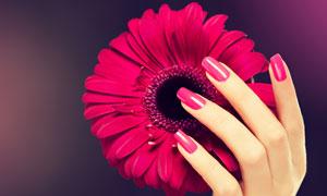 在手中的一朵菊花特写摄影高清图片