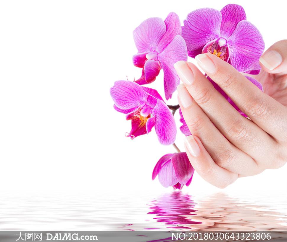 捧在手心里的紫色兰花摄影高清图片