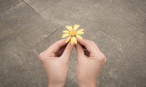 手拿着的一朵小花特写摄影高清图片