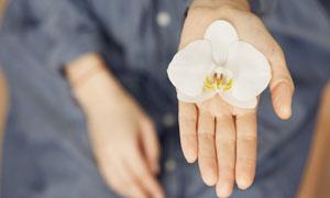 用手托着的白兰花花瓣摄影高清图片
