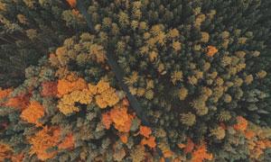 树林中穿过的公路鸟瞰摄影高清图片