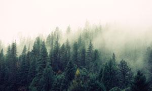 雾气朦胧环境茂密树林摄影高清图片