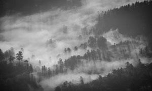 弥漫着雾气的山间树林风光高清图片