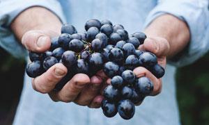 用双手拿着的一串葡萄特写摄影图片