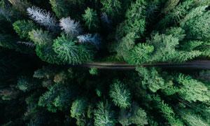 被小路横穿而过的树林摄影高清图片