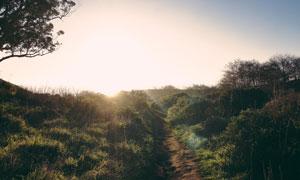 耀眼阳光下的小路草丛摄影高清图片