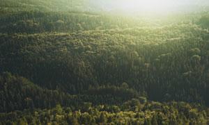 青青树林自然风景鸟瞰摄影高清图片
