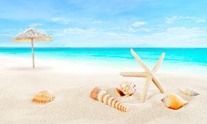 沙滩上的海星和贝壳摄影图片