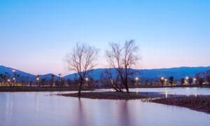 暮色下湖中枯树美景摄影图片