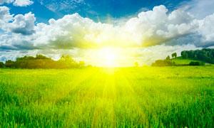 清晨阳光下的稻田摄影图片