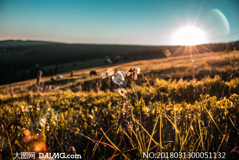 清晨美丽的野花微距摄影图片
