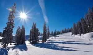 阳光下树林雪后景观摄影图片