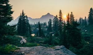 夕阳下美丽的山林摄影图片