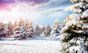 清晨森林里的雪景摄影图片