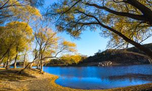 秋季野外河流和大树摄影图片