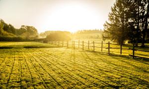 早晨耀眼阳光下的农田摄影高清图片