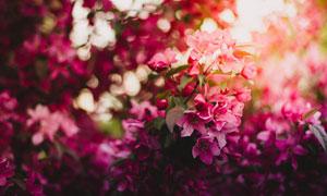 在花期盛开的花卉特写摄影高清图片