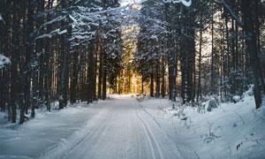 落满了白雪的林间小路摄影高清图片