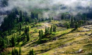 山坡上的小树植被风光摄影高清图片