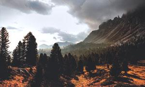 山脚下的茂密树林风光摄影高清图片